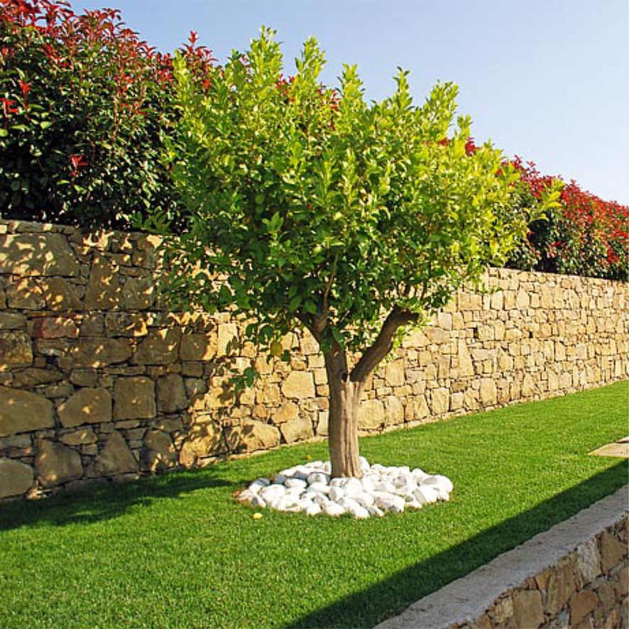 Terraces and Stone Wall